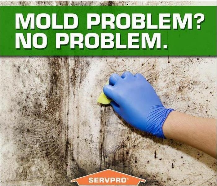 Commercial Why Mold Mitigation is Important to Your Business in Hendricks County