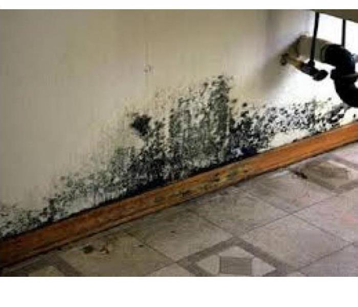 Mold Remediation Secondary Damage Can Occur After Water Damage in Your Hendricks County Home or Business