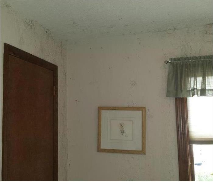 Mold Remediation Plainfield and Avon Residents:  Follow These Mold Safety Tips if You Suspect Mold